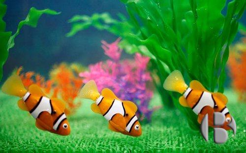 Fish & Wish