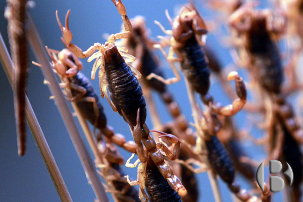 снеки из жуков