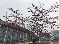 VMF 2018. Китай. Цветы круглый год в Гуанчжоу