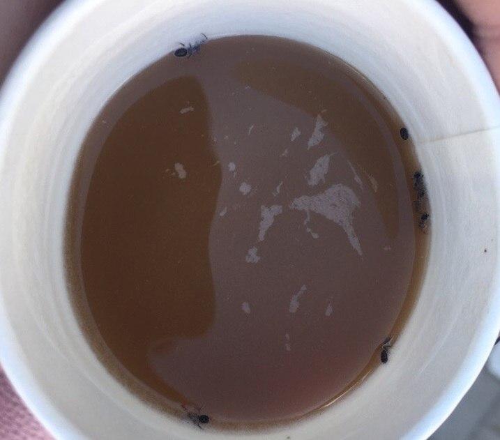 Брянские муравьи не могут устоять перед соблазнительным вкусом кофе из автомата.